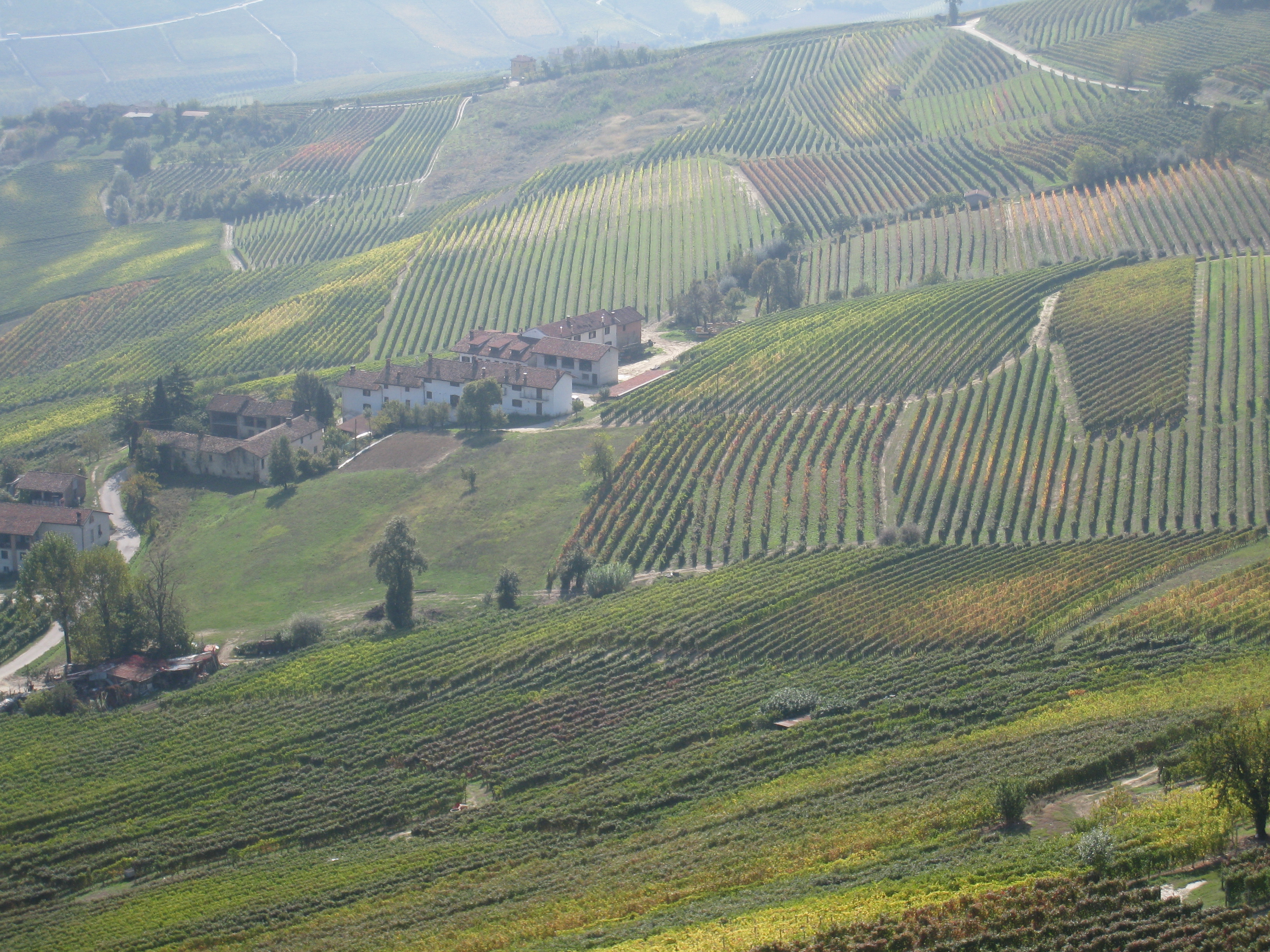 Brunate Barolo Vineyard Barolo Vineyards